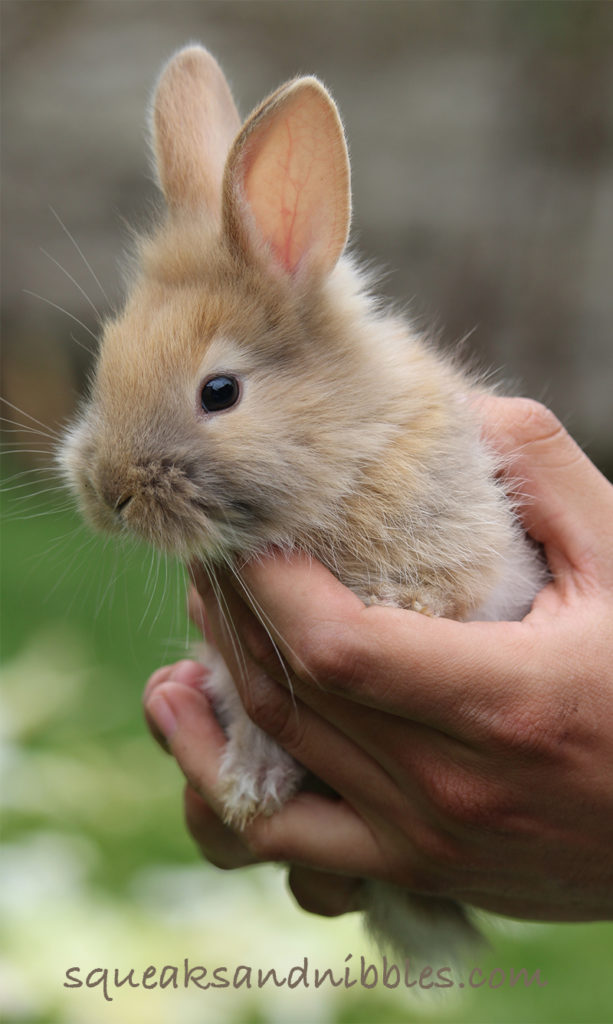 How To Give A Rabbit A Bath - A Guide To Bunny Bathing