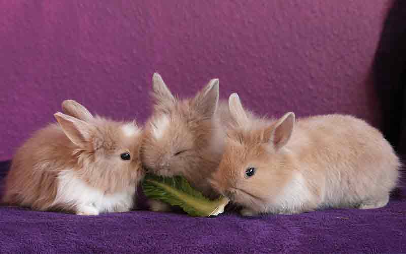 Can rabbits eat cabbage? Check out our guide to rabbits and cabbage!