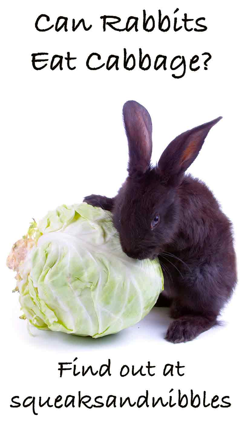 Can Rabbits Eat Cabbage? We take a look at rabbits and cabbage - letting you know whether cabbage is safe for bunnies!