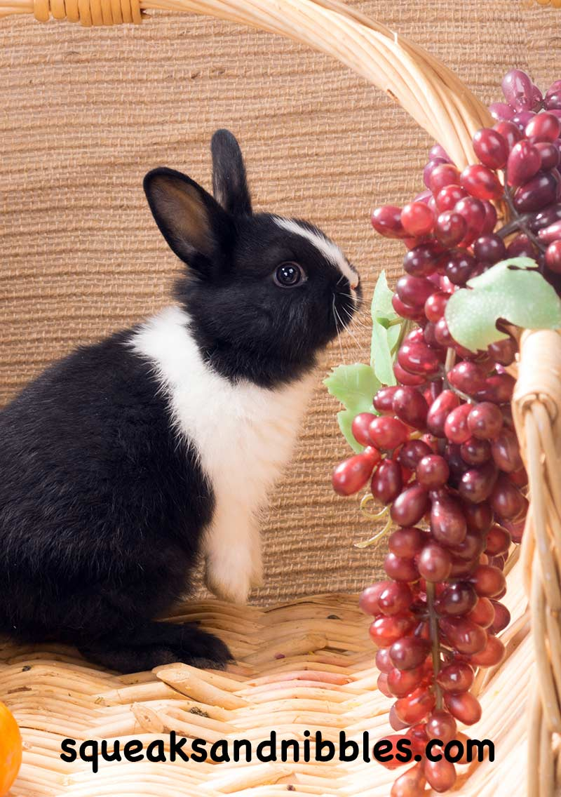 Do rabbits eat grapes? And is it safe to share grapes with your bunny? We investigate