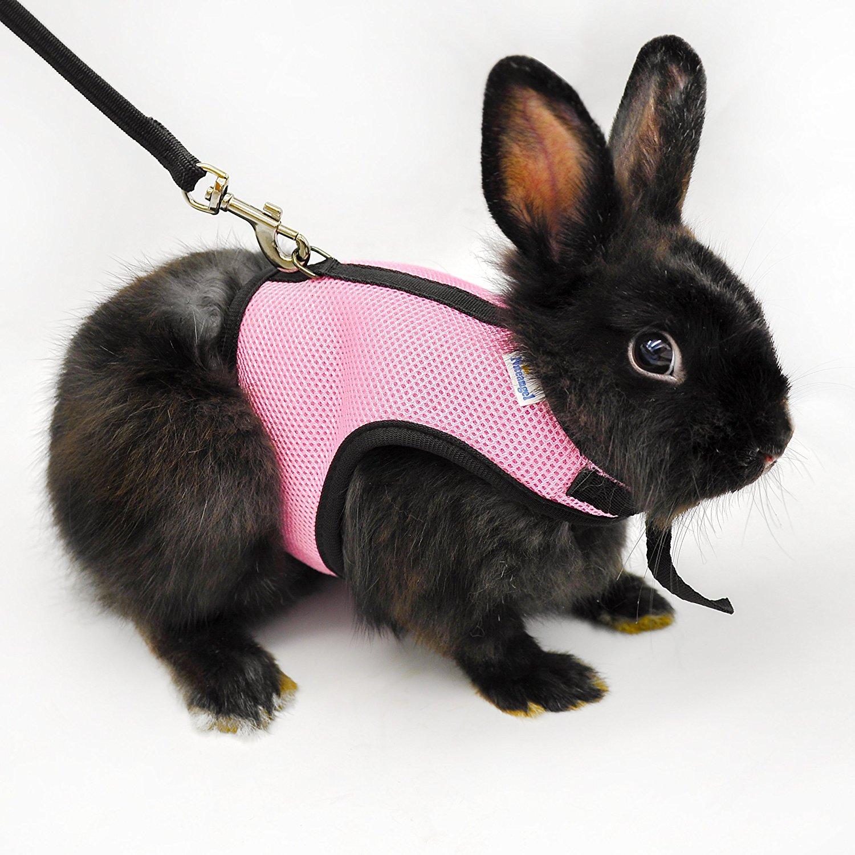Rabbit on a leash - rabbit harness
