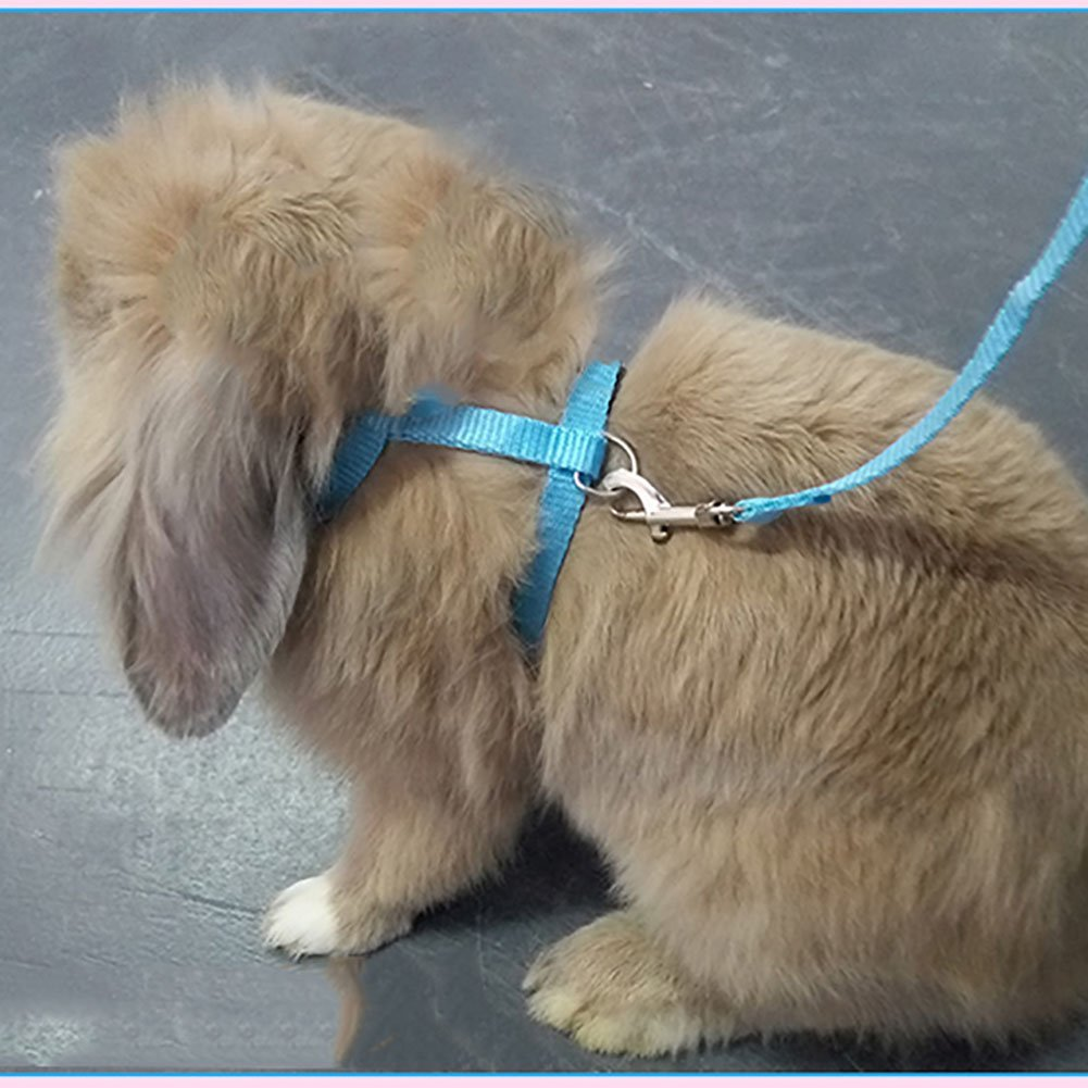 Bunny on a leash can you walk a rabbit by squeaks and nibbles bunny on a leash bunny harness publicscrutiny Gallery