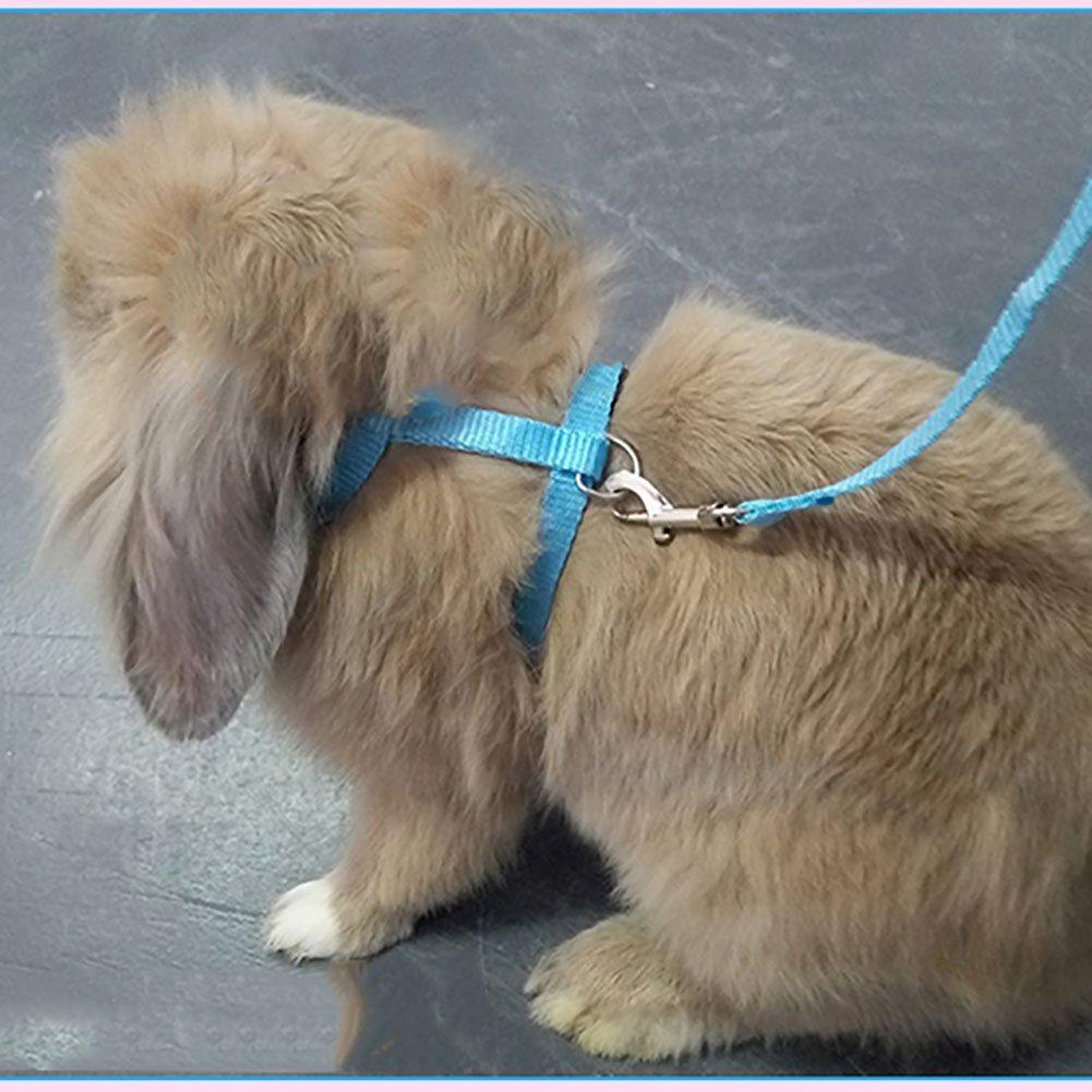 Bunny on a leash - bunny harness