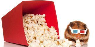 Popcorn for hamsters