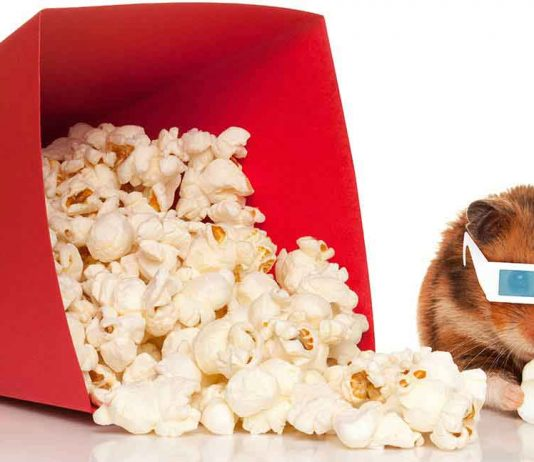 Popcorn for hamsters