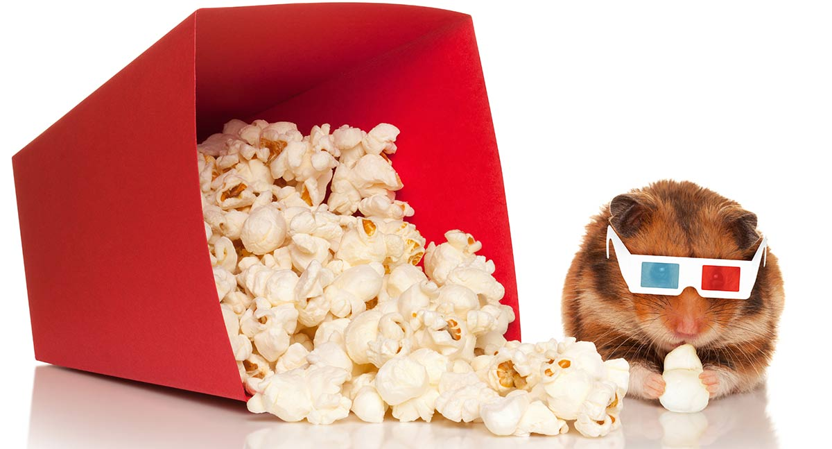 popcorn-for-hamsters.jpg