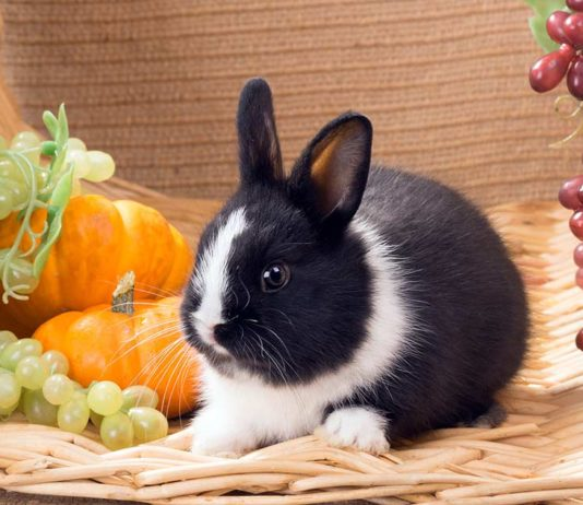 Do rabbits eat grapes? Let's find out