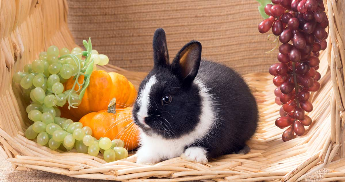 Do Rabbits Eat Grapes - A Healthy Eating For Pets Guide