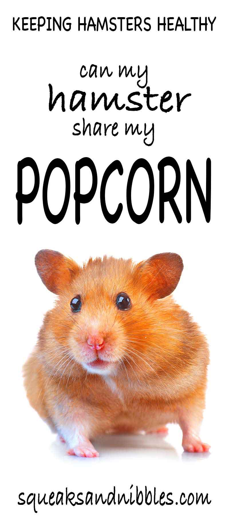 Can hamsters eat popcorn? Find out in our healthy eating guide for hamsters