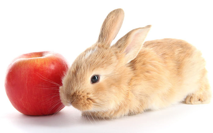 Can You Feed A Rabbit Apples