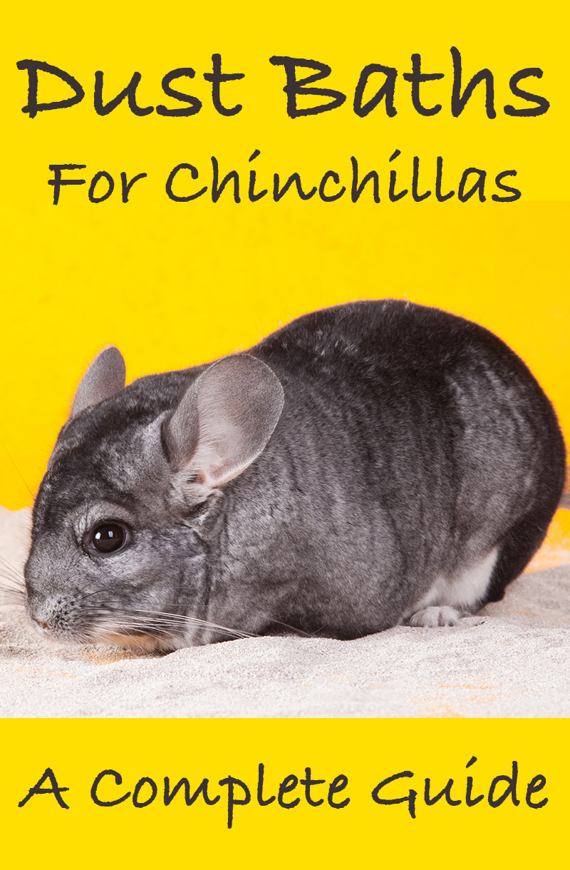 Why do chinchillas bathe in dust? A complete guide to chinchilla dust baths