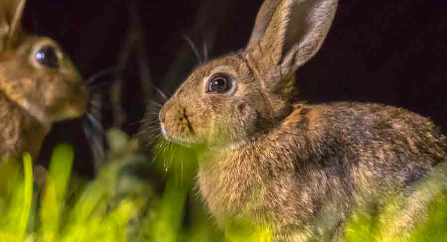 can bunnies see in the dark