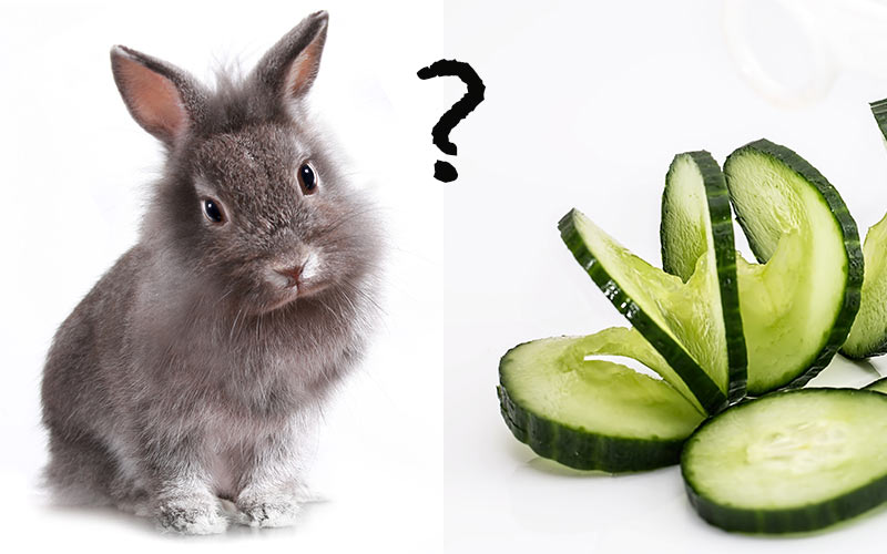 What Food Do Pet Rabbits Eat