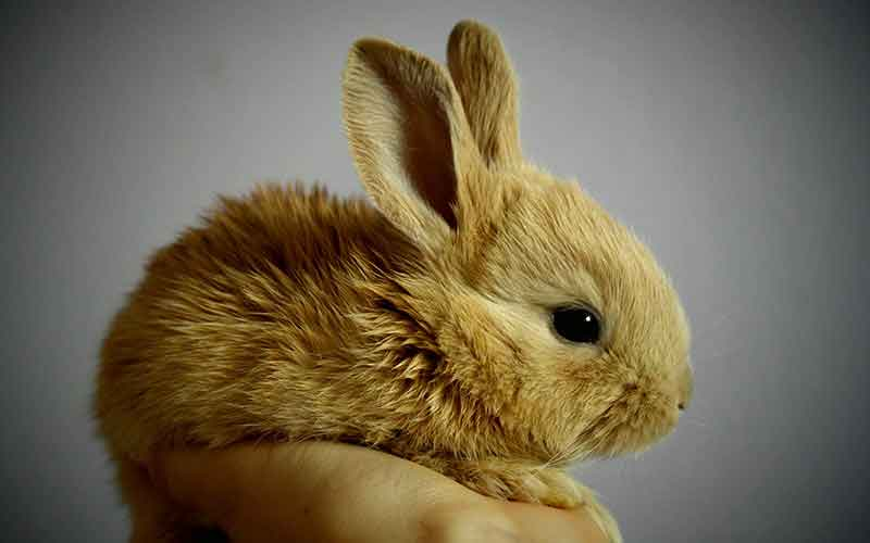 Can Bunnies See In The Dark A Rabbit Vision Guide