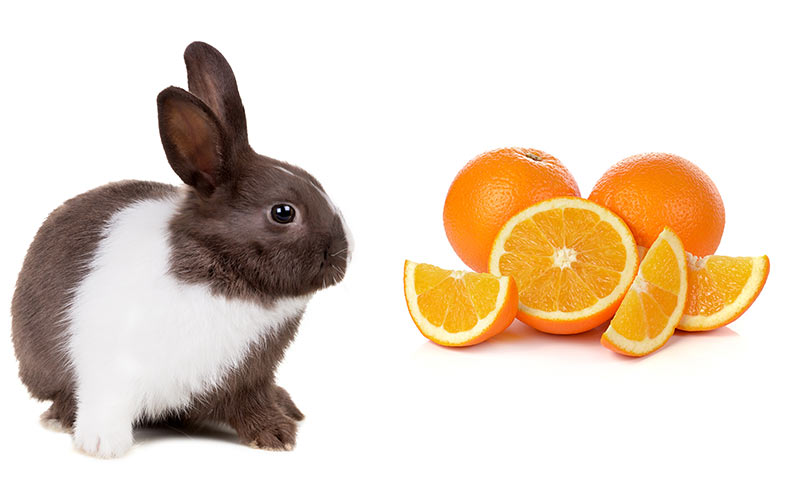 Suggested Vegetables and Fruits for a Rabbit Diet  House