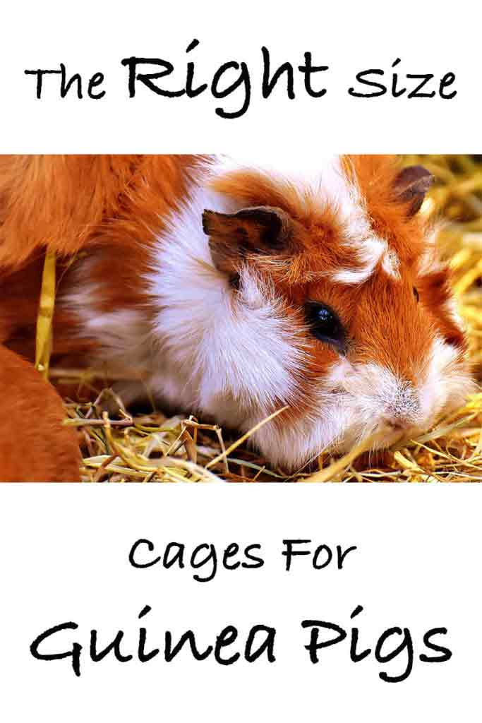 Guinea Pig Cage Size Guide