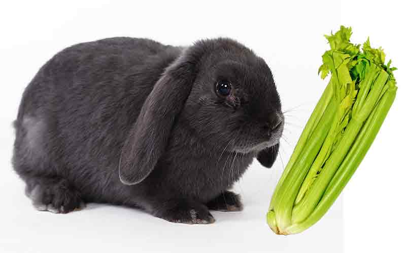 Can Rabbits Eat Celery? Let's Find Out!