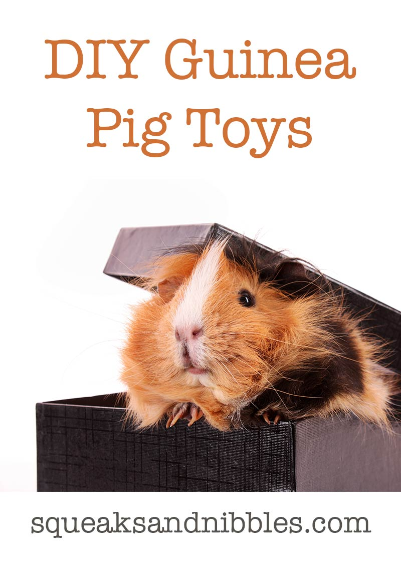 Diy guinea pig toys the best guinea pig toys you can make for How to make a piggy bank you can t open