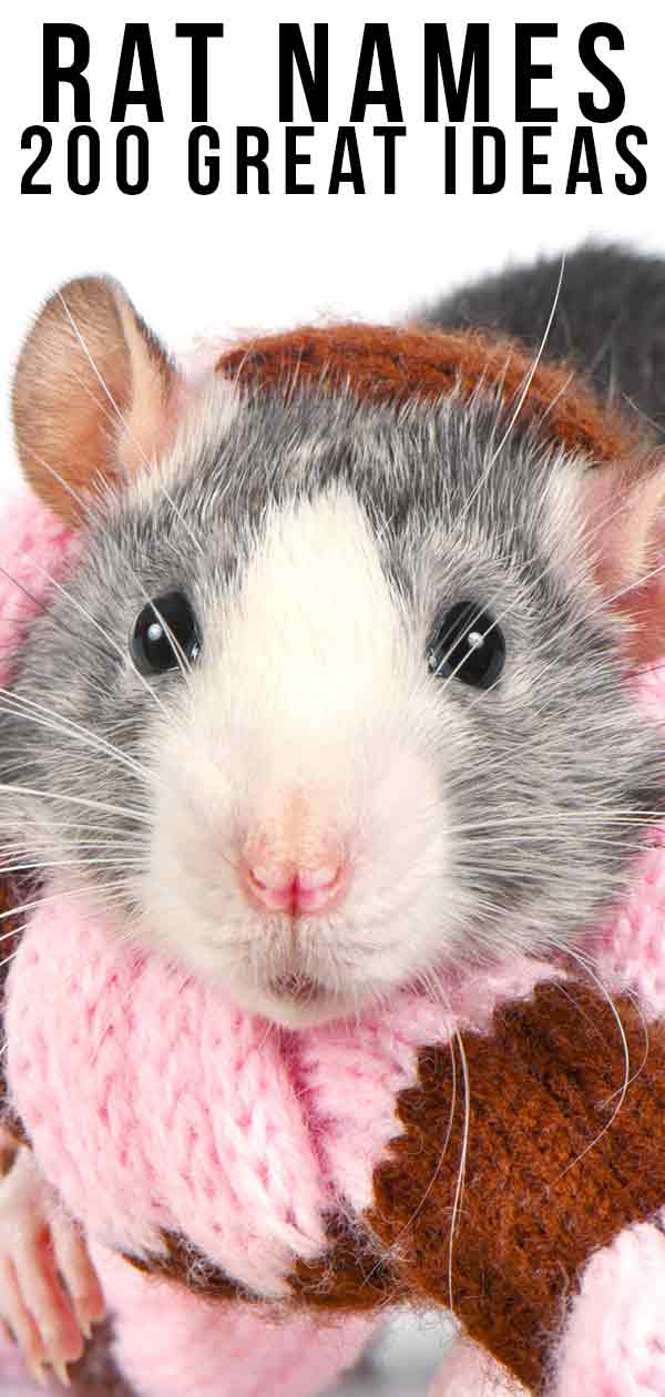 Rat Names - Over 200 Great Ideas For Naming Your Pet Rat