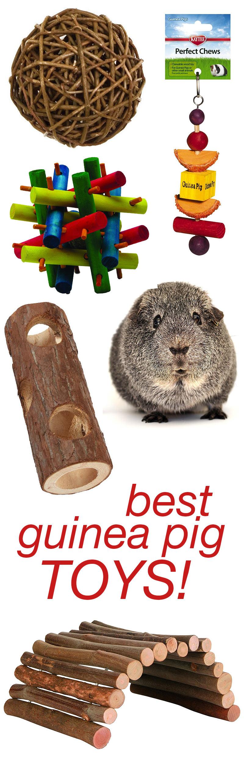 Best Guinea Pig Toys