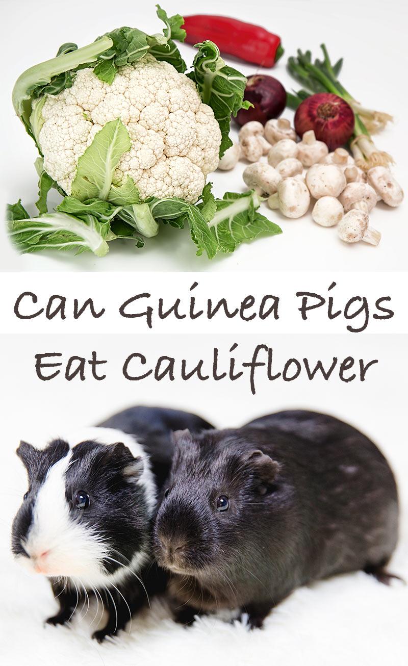 Can Guinea Pigs Eat Cauliflower?