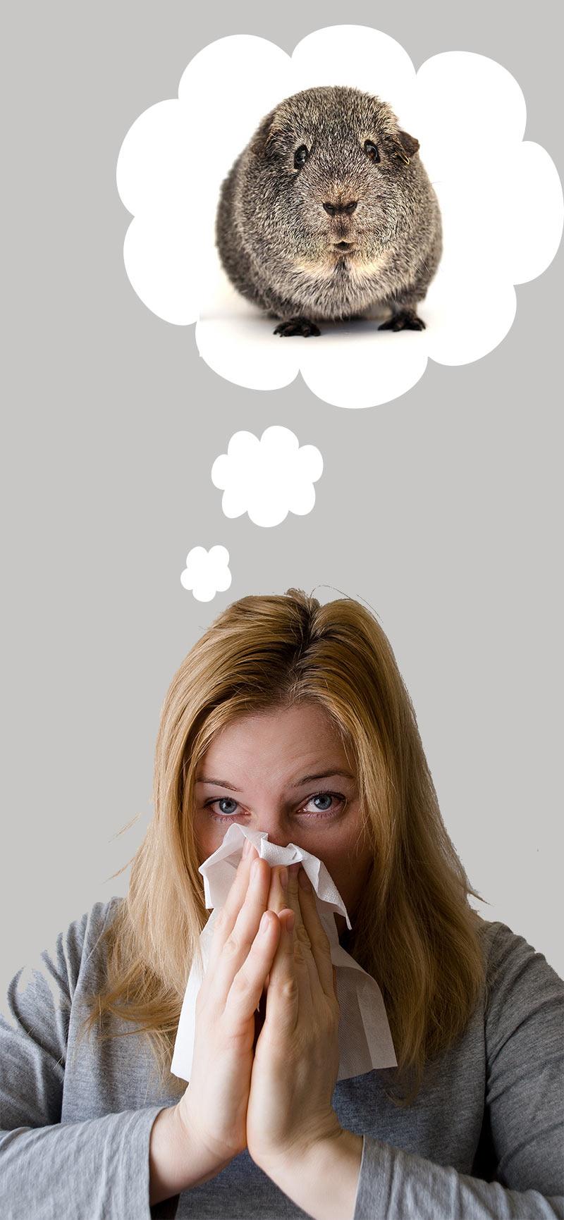 Guinea Pig Allergies - Am I allergic to my guinea pig