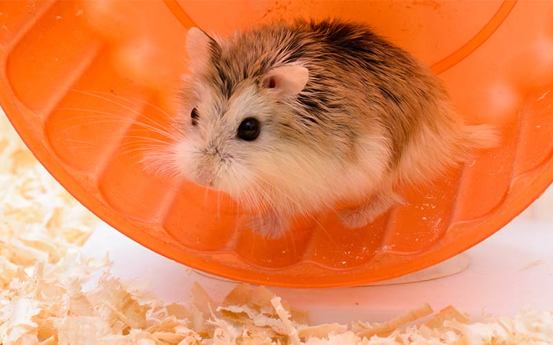 The Very Best Girl Hamster Names For Your New Furry Friend