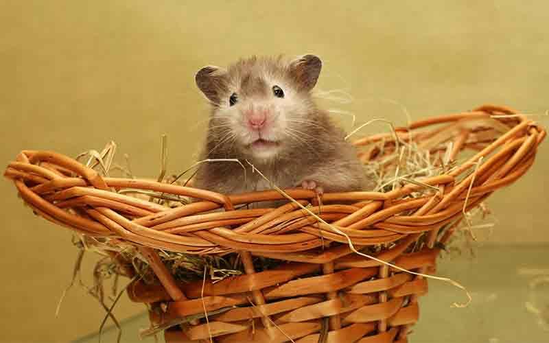 Best Hamster Tank