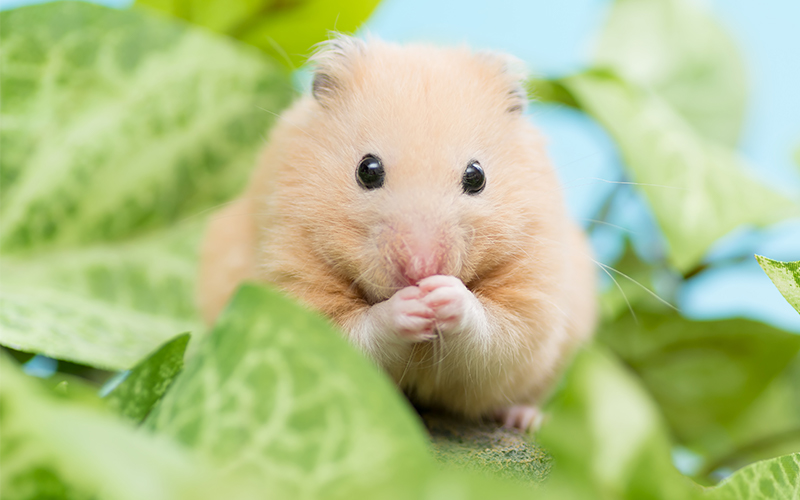 All Food That Hamsters Can Eat