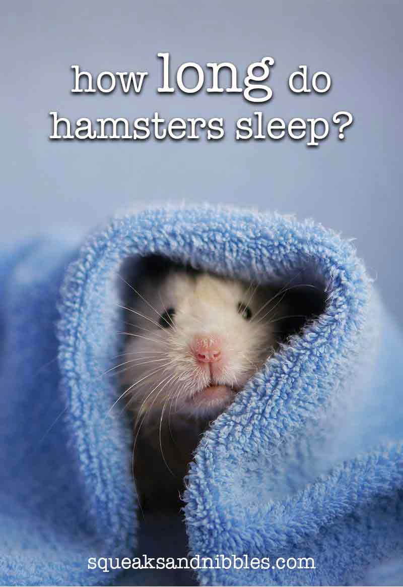 Hamster Sleep Guide - How Long Do Hamsters Sleep For?