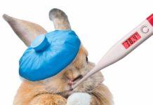 snuffles in rabbits
