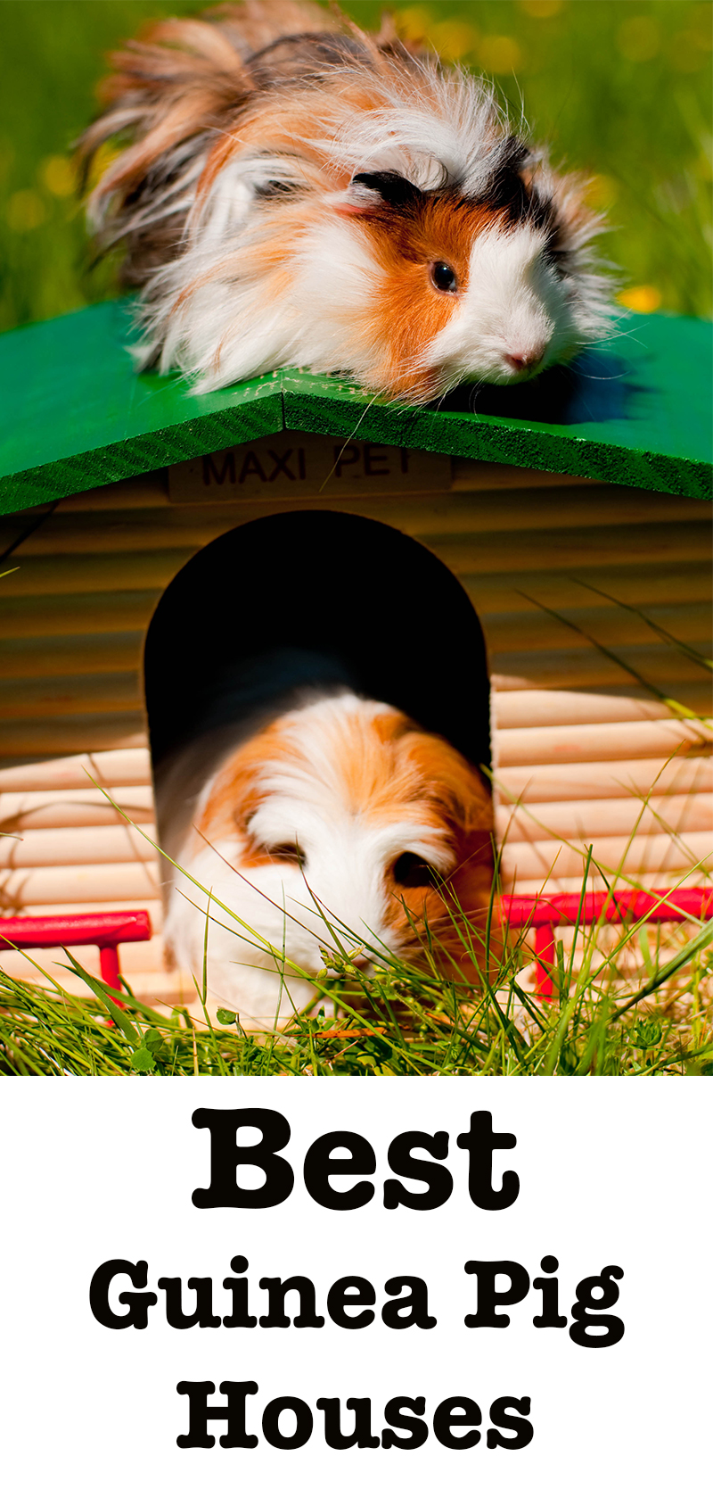best guinea pig houses and hideaways