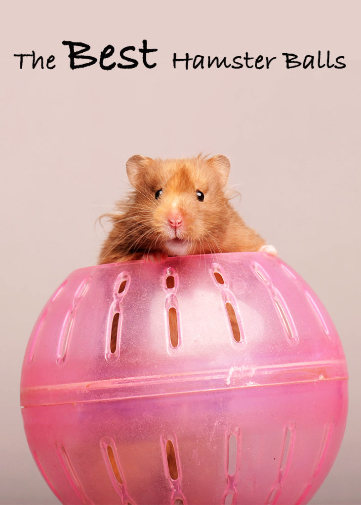 Best hamster ball for syrian dwarf and robo hamsters best hamster ball sciox Image collections