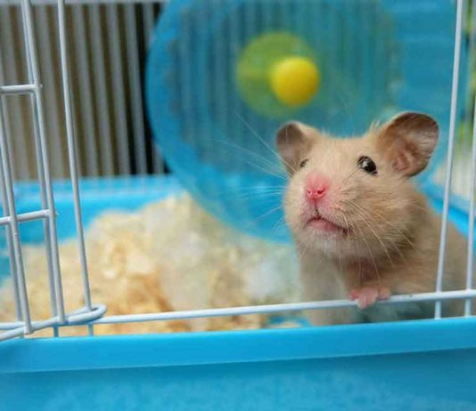 The top hamster cages