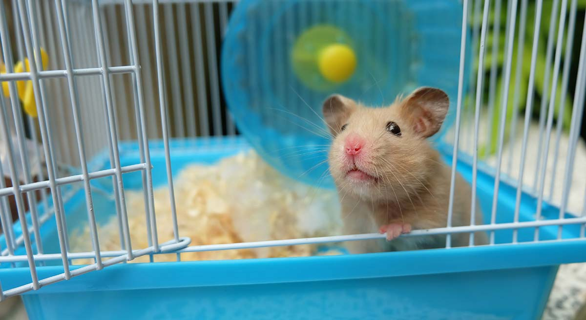 best hamster cage top choices for syrian and dwarf hamsters. Black Bedroom Furniture Sets. Home Design Ideas