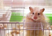 Hamster Cages: The Best Hamster Cage For Syrian And Dwarf Hamsters