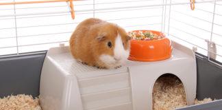 Best indoor guinea pig cage
