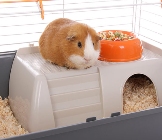 Best indoor guinea pig cage