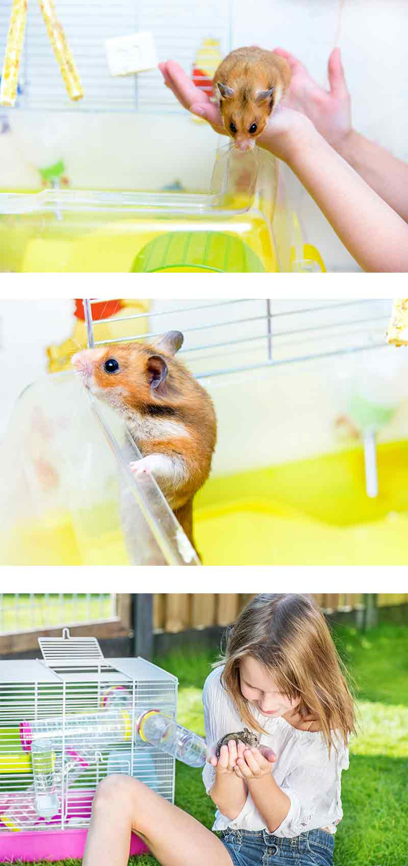 best large hamster cages for syrian, dwarf, chinese and robo hamsters