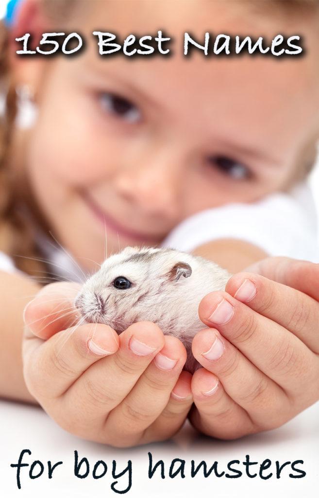 Best boy hamster names