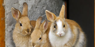 Can Bunnies Catch Colds?