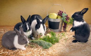 can bunnies eat zucchini