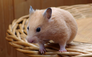 Best cool hamster cages