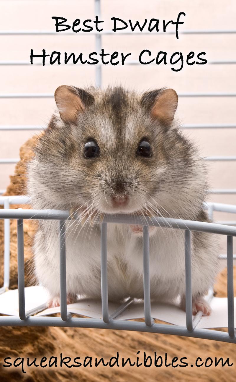 best dwarf hamster cages