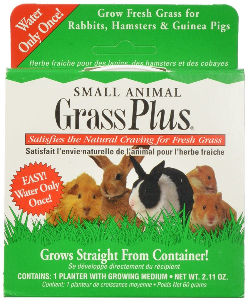 grow guinea pig grass