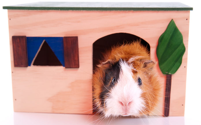 wooden guinea pig house
