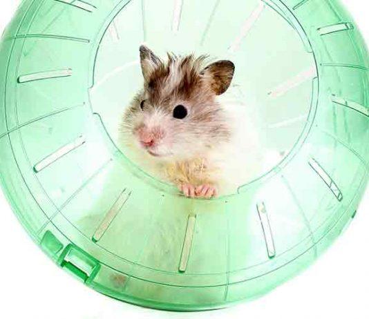 best hamster ball