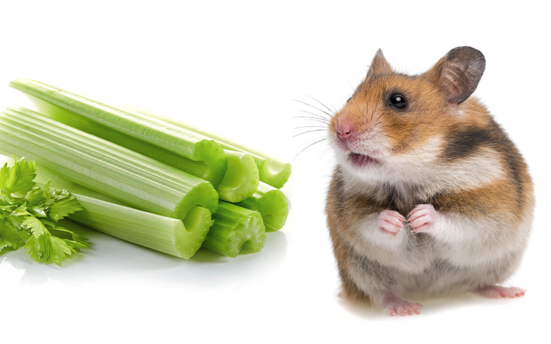 What Can I Feed My Hamster Besides Hamster Food