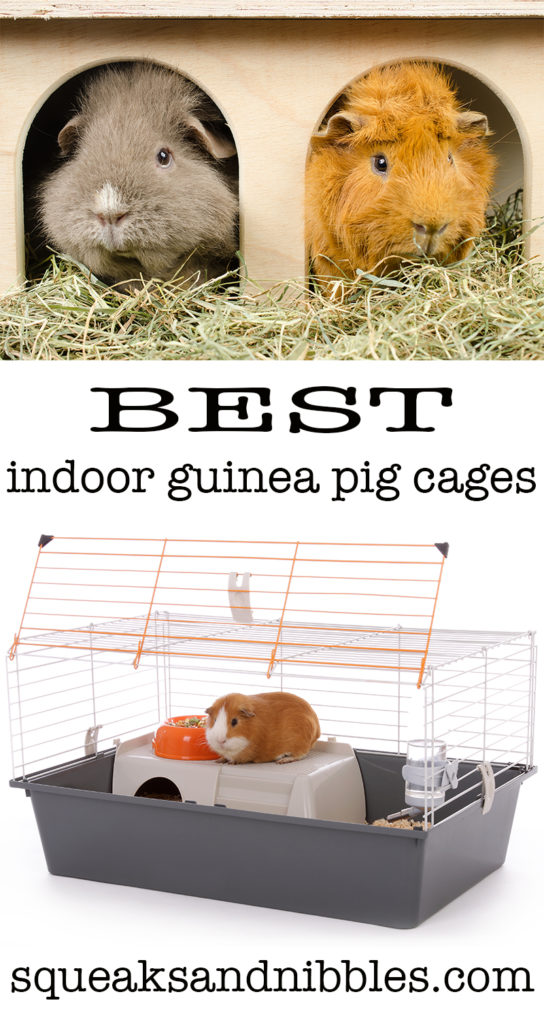 best indoor guinea pig cages reviewed with top tips