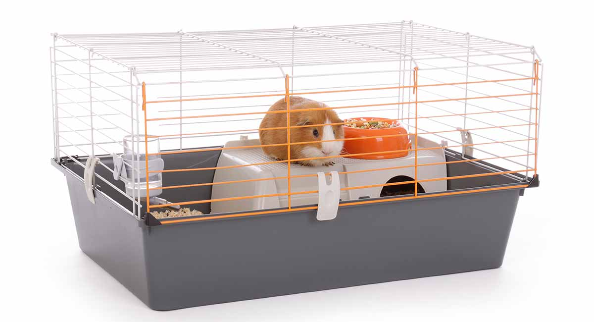 Picture of: Best Indoor Guinea Pig Cages Hutches And Runs Reviewed